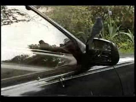 how to keep birds from pooping on my deck birdshot the ballad of birds pooping on my car