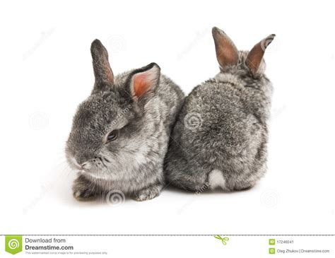 new year for rabbit happy new year of rabbit stock image image 17246041
