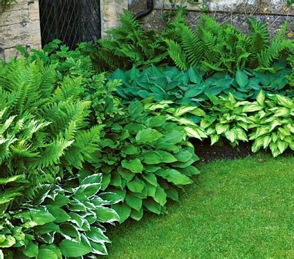 Patio Plants For Shade by Perennial Shade Garden Plans For Shade Loving Perennials