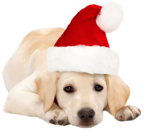 dog with santa hat png clipart best web clipart