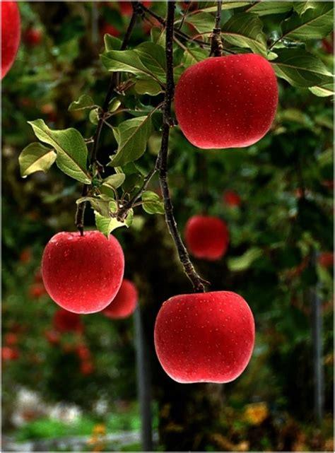 apple x japan red delicious japan favorite places spaces