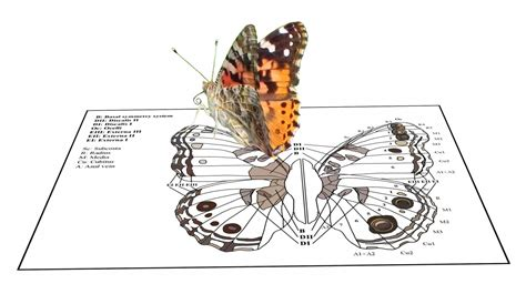 pattern formation and eyespot determination in butterfly wings um today on the wings of lepidoptera