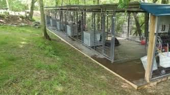 Backyard Dog Breeders Rottweiler Dog Kennels Nashville Tennessee Rottweiler