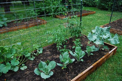 What Is A Community Garden by Community Garden Offers Independence For Botany Major