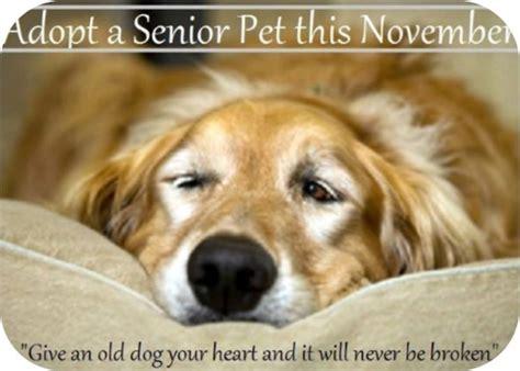 senior dogs for adoption adopt a senior