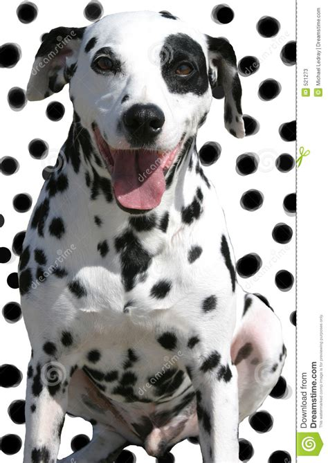 spotted puppies isolated spotted on spotted background stock image image 521273