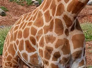 Wall Stickers Australia Home Decor quot giraffe spots quot by jenny brice redbubble