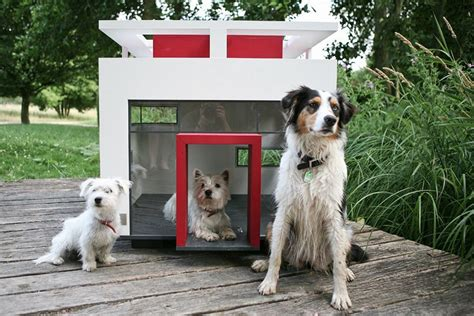 Small Dogs Need Home House Designs With Creative Plans Homestylediary