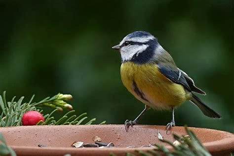 what to feed birds in the winter moral fibres uk eco