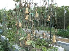 what does trellis bountiful trellised squash abundant mini gardens