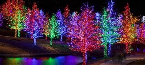 outdoor tree light shows top 50 things to do in dallas fort worth this bank home loans