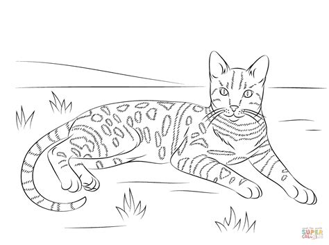 Coloring Pages Of Tabby Cats | tabby cat coloring download tabby cat coloring