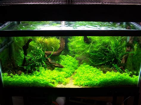 aquascape fish this reminds me of my old biotope aquarium aǫᴜᴀʀɪsᴛ