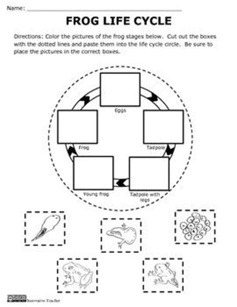 frog cycle template frog cycle activity and craft crafts activities