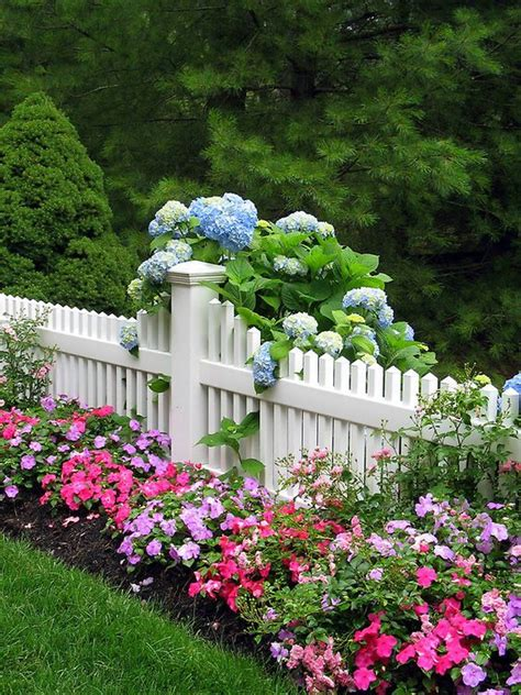 pretty white picket fence with blue hydrangea and pink