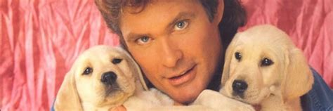 hasselhoff puppies piranha 3dd stunt continues as david hasselhoff joins the cast collider