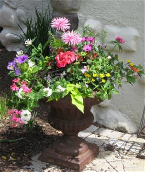 Summer Planter Ideas by 46 Best Images About Summer Planting On