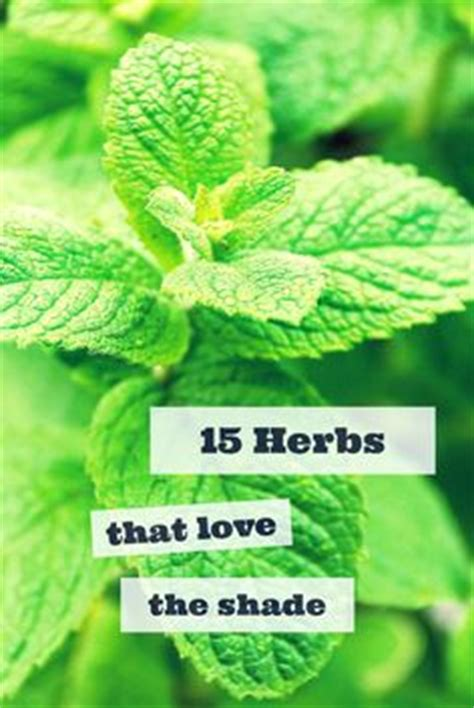 1000 images about growing herbs in the garden on 1000 images about garden on pinterest garden art