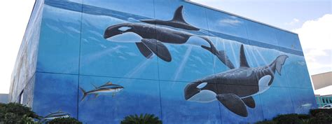 Painting A Wall Mural south padre island wyland s whaling wall south padre island