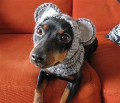 how to knit a puppy knitted hats with ears easy free patterns
