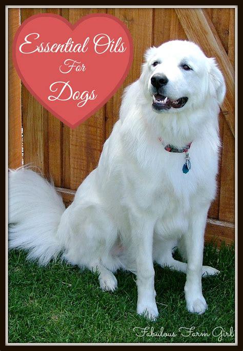 essential oils for dogs essential oils for dogs fabulous farm