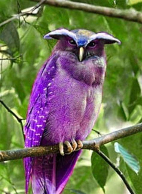 Bird Purple by Purple Birds Purple Purple Or Blue