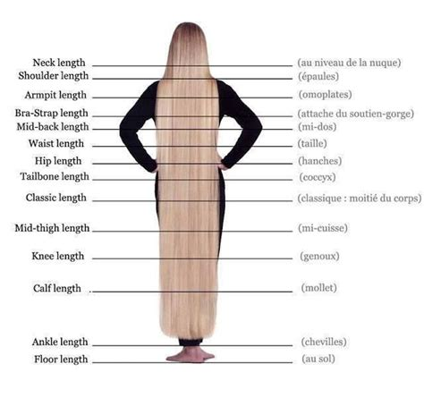 Hair Length For Type by Best 25 Hair Length Chart Ideas On