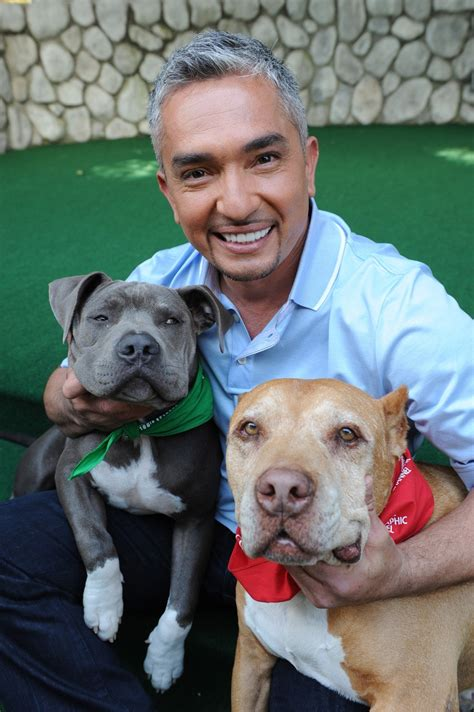 cesar millan puppy cesar cesar millan photo 15340434 fanpop
