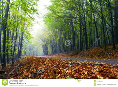 road in forest stock photo image of darkness mist mountain road in a beautiful autumn forest stock image