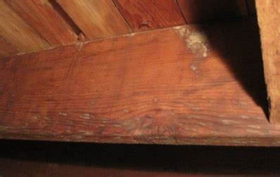 removing mold on wood