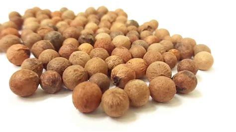 Medicinal And Cosmetic Value Of Sandalwood by Tree Seed Indian Sandalwood Santalum Album Chandan
