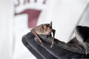 Bats In Bats Avoid Collisions By Calling Less In A Crowd