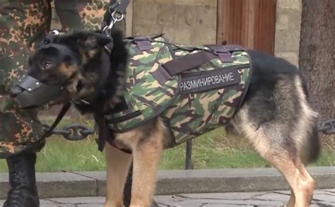 armour dogs new armor for dogs ensures their protection at the same level as