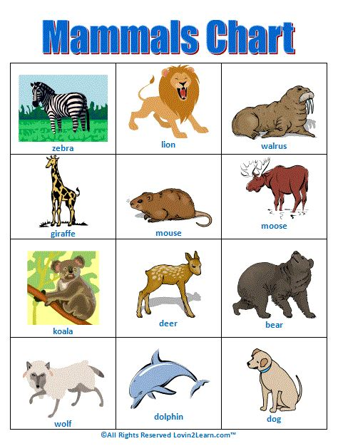 printable animal groups mammals chart www loving2learn com teaching science