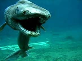 Blind Shark Facts Top 5 Rarest Marine Deep Sea Creatures Marine Sea Creatures