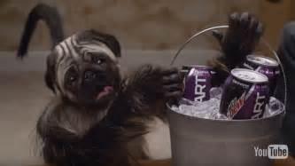 Puppy monkey baby gets a remix 171 live 105