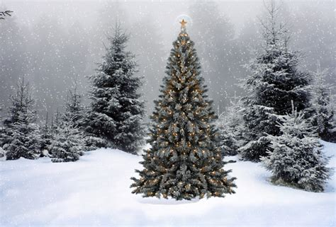 wallpaper christmas new year christmas tree snow