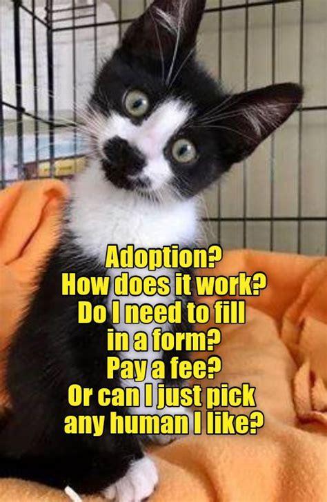 Tuxedo Baby Meme - 4172 best funny puppy memes images on pinterest funny