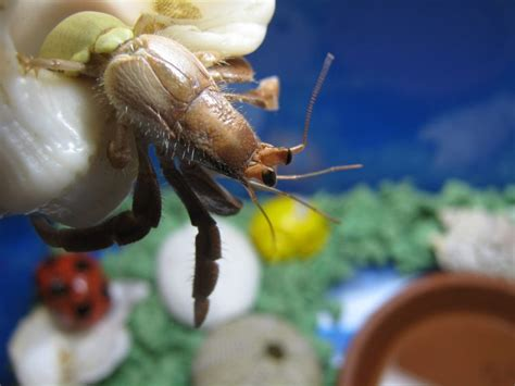 do hermit crabs need a heat l bringing home hermit crabs don t do what i did petful