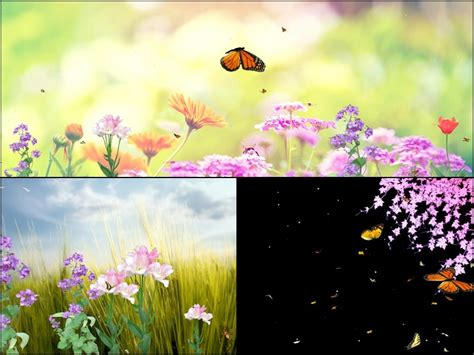 butterfly wallpaper for desktop with animation animated butterfly wallpaper moving