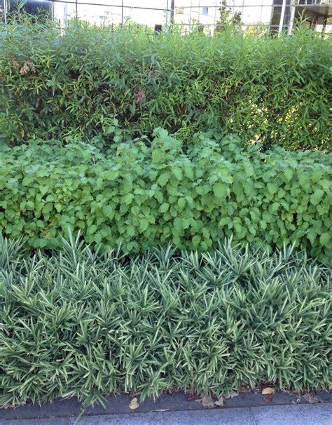 sichtschutz garten langlebig swr beitrag heckenpflanzen
