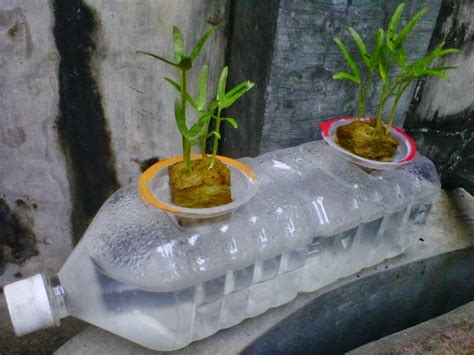 Jual Bibit Kangkung Air cara menanam kangkung hidroponik dengan botol bekas