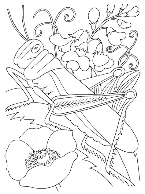 bugs coloring pages free printable bug coloring pages for