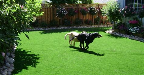 beautiful landscaping ideas  small backyards  dogs