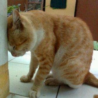 Mainan Kucing Cat It Senses Catit Desain Senses Scratch Pad galau abiz
