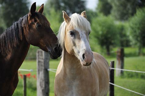 stable diet   horses  eat