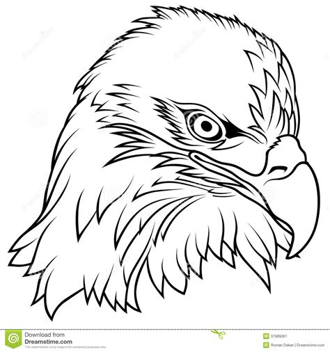 printable eagle coloring pages for kids cool2bkids printable bald eagle coloring pages for kids cool2bkids