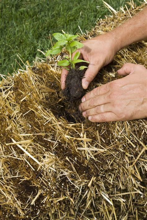 Straw Bale Planter by Gardening In Straw Garden Housecalls
