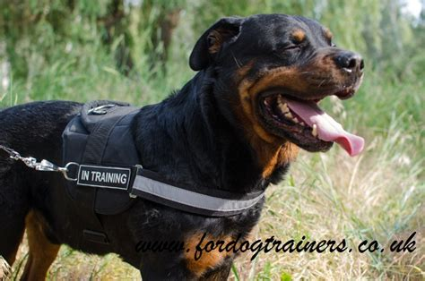 rottweiler service dogs reflective harness for rottweiler service dogs with patches