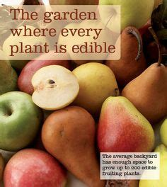 four hardest vegetables to grow from seed buy transplants seeds hard to find on pinterest seeds saving seeds and